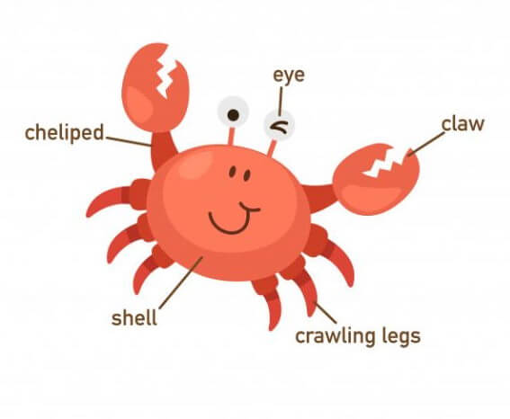 Crab Diagam Crab Diagam