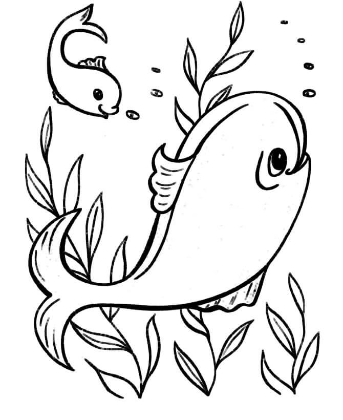 Easy and Interesting Sea Animal Coloring Pages for Kids Coloring The Dolphins