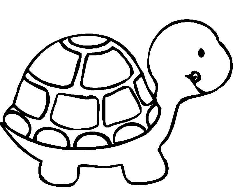 Animal Coloring Printables for Kids Little Turtle Little Turtle