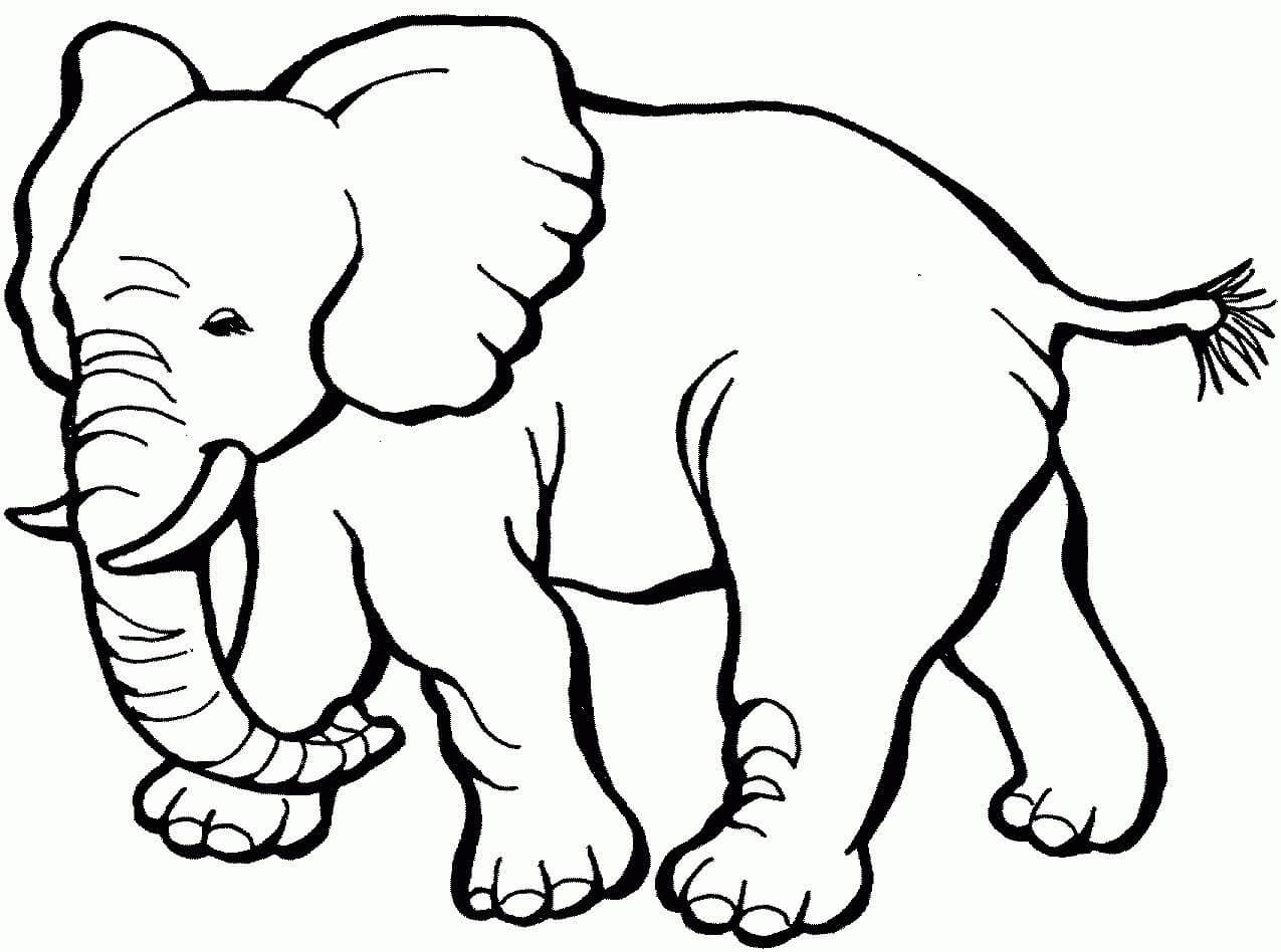 Mumma Elephant